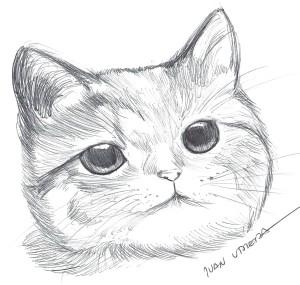 gato en lapicero